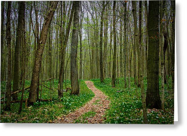 Spring Forest Path  Greeting Card by Pat Vleer