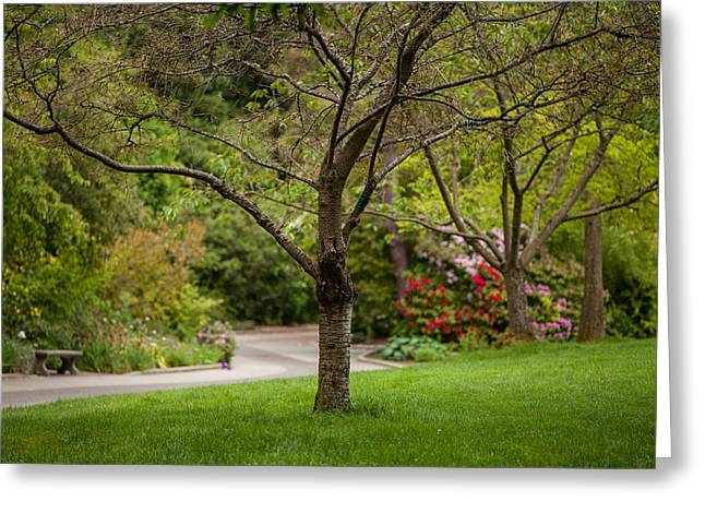 Spring Garden Landscape Greeting Card by Mike Reid