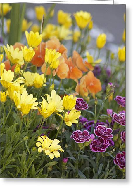 Greeting Card featuring the photograph Spring  Garden by Sylvia Hart