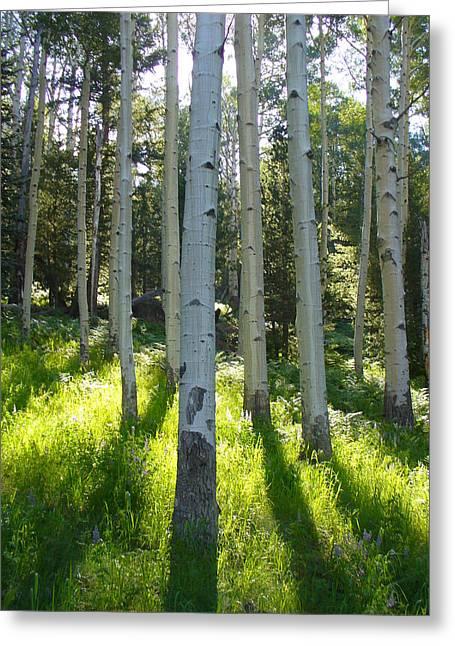Spring Hike On Kachina Trail Greeting Card
