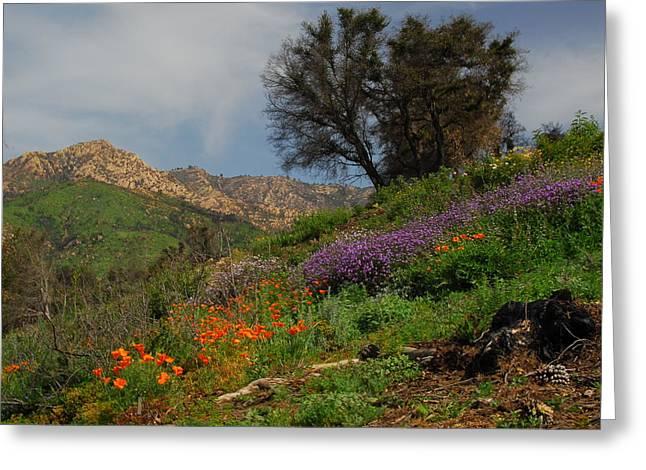 Spring In Santa Barbara Greeting Card by Lynn Bauer