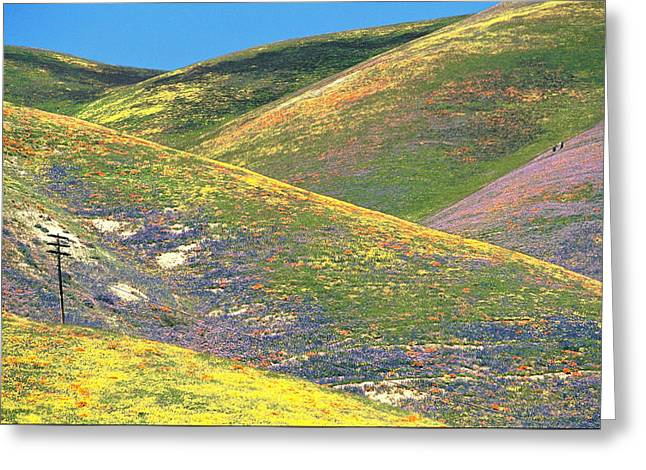 Spring In The Gorman Hills Greeting Card