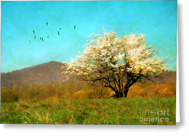 Spring In The Mountains Greeting Card by Darren Fisher