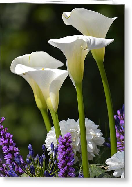 Spring Lillies Greeting Card by Dickon Thompson