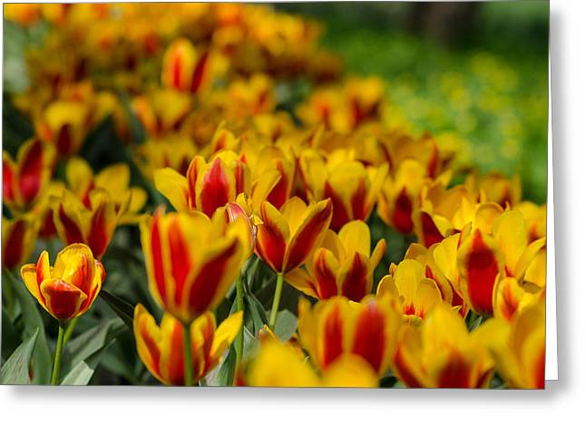 Spring Mood Greeting Card