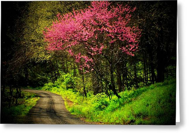 Spring Mountain Road Greeting Card by Michael L Kimble