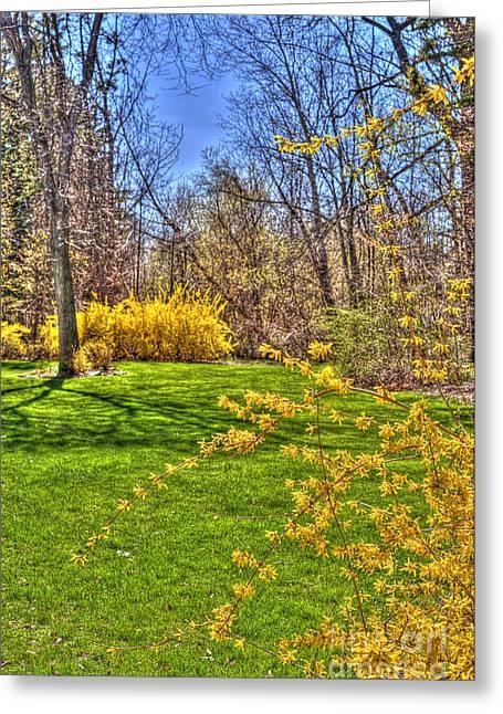 Spring Of Joy Greeting Card by Anca Jugarean