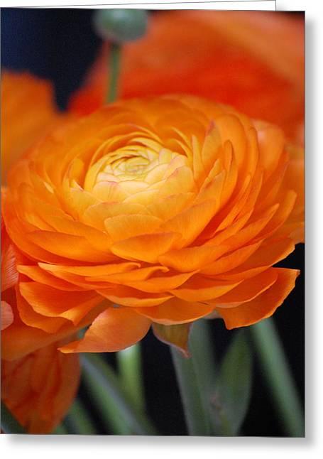 Spring Orange Greeting Card by Dickon Thompson