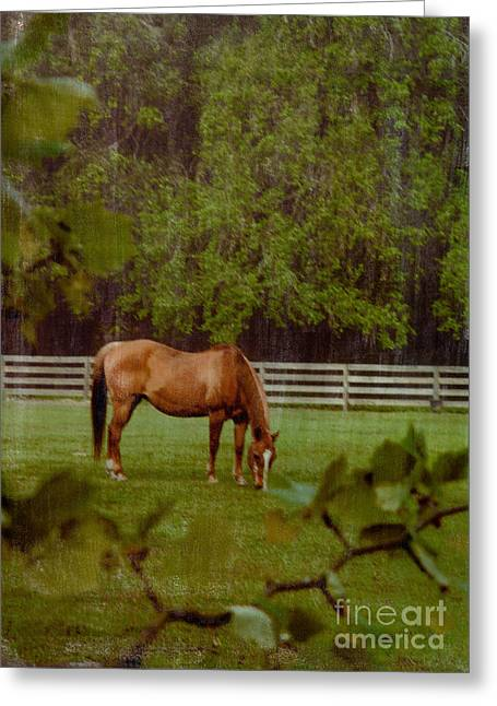 Spring Pasture 2 Greeting Card