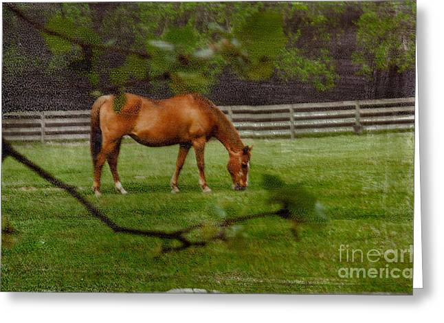 Spring Pasture Greeting Card