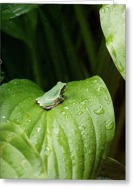 Spring Peeper Greeting Card