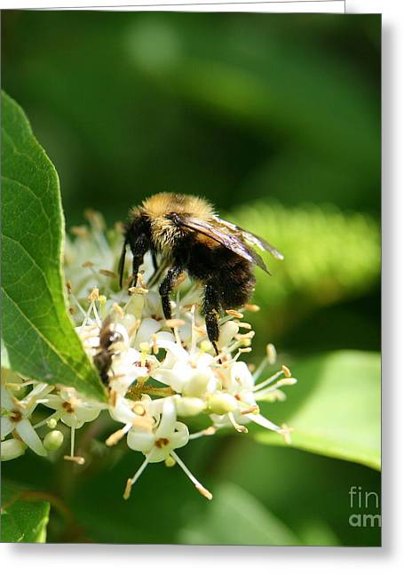 Spring Pollination Greeting Card by Neal Eslinger