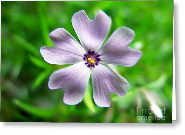 Spring Purple Greeting Card by Thanh Tran