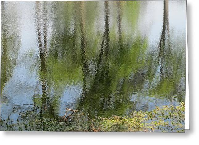 Spring Reflections Greeting Card by Valia Bradshaw