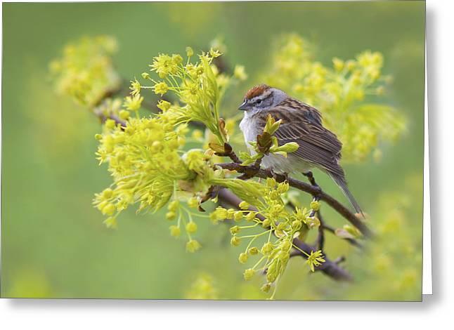 Spring Reverie Greeting Card