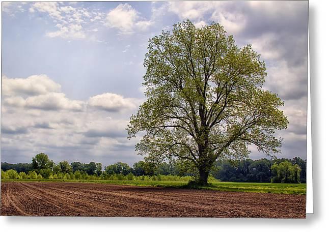 Spring Shade Tree Greeting Card by Bill Tiepelman
