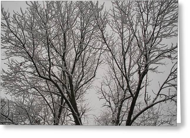 Spring Snow Greeting Card by Suzanne Fenster
