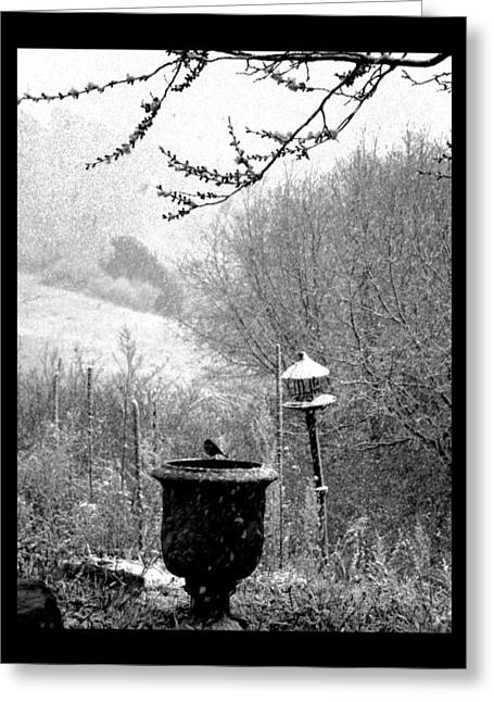 Greeting Card featuring the photograph Spring Snowstorm 2012 by Susanne Still