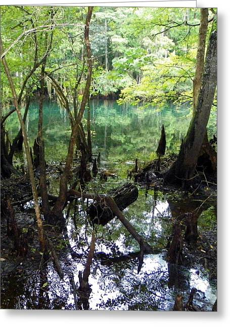 Spring Swamp Reflection Greeting Card by Sheri McLeroy