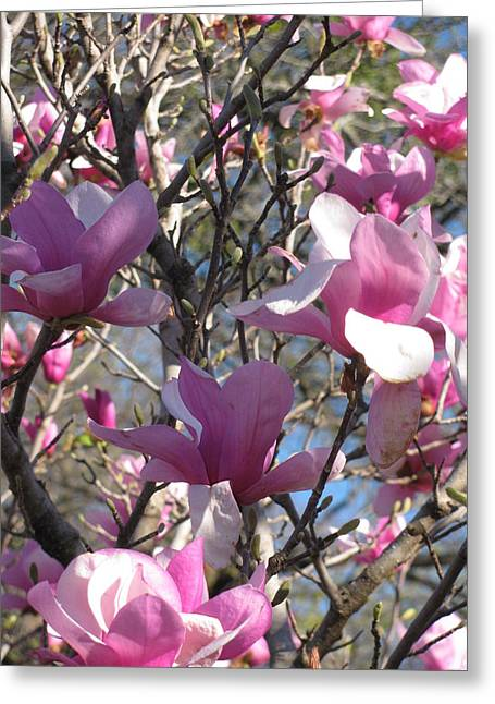 Spring Time Revisited Greeting Card by Shawn Hughes