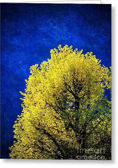 Spring Tree Greeting Card by Silvia Ganora
