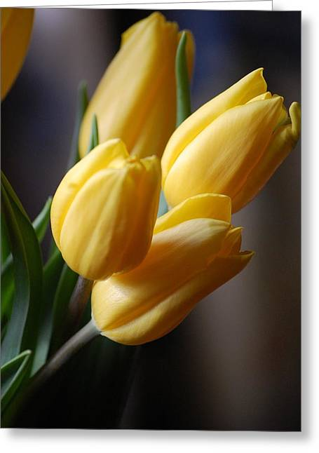 Spring Tulips - Yellow Greeting Card by Dickon Thompson