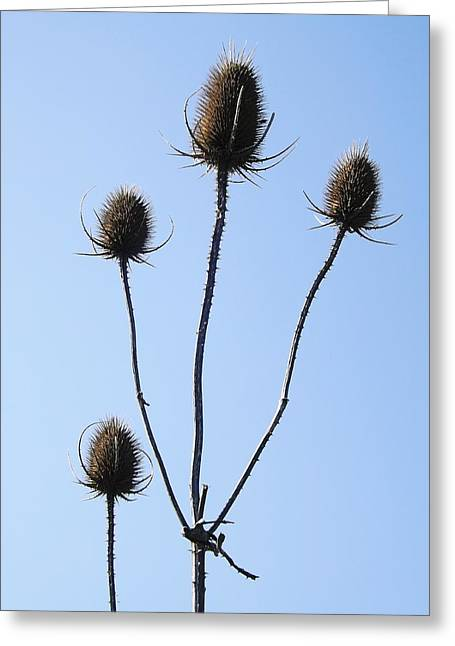 Greeting Card featuring the photograph Spring Weeds 1 by Gerald Strine