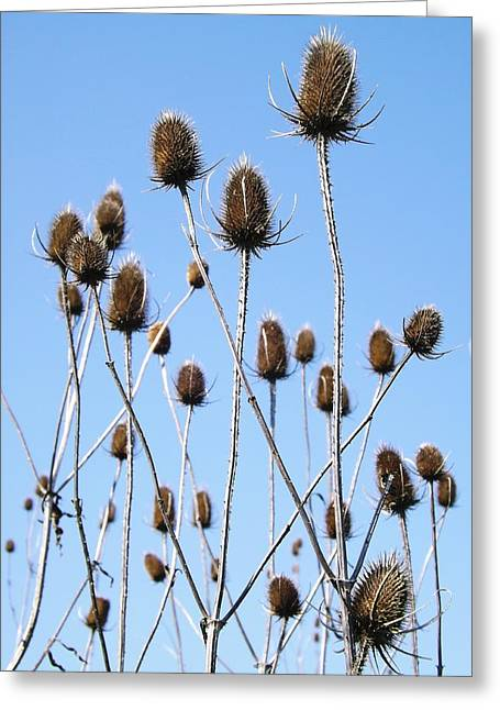 Greeting Card featuring the photograph Spring Weeds 2 by Gerald Strine