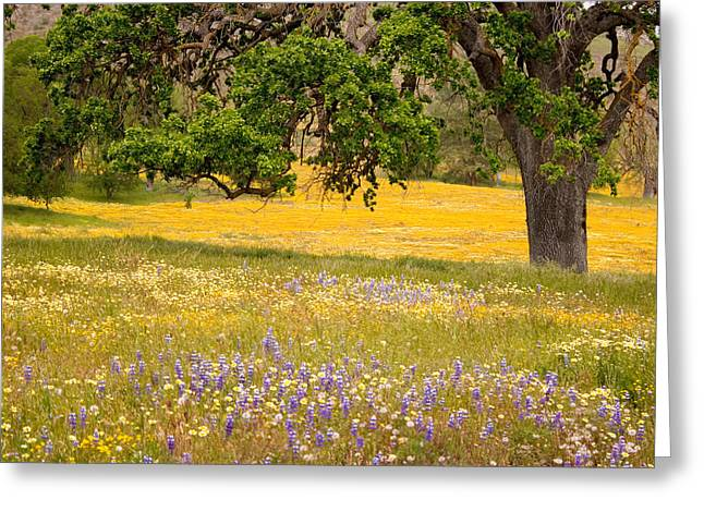 Spring Wildflowers Greeting Card by Carol Leigh