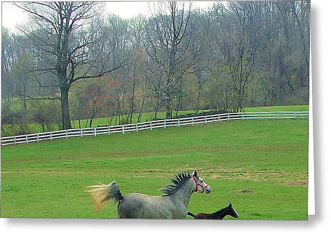 Springs First Prance Greeting Card by Heather  Boyd