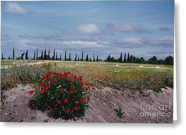 Springtime In Spain Greeting Card by Barbara Plattenburg
