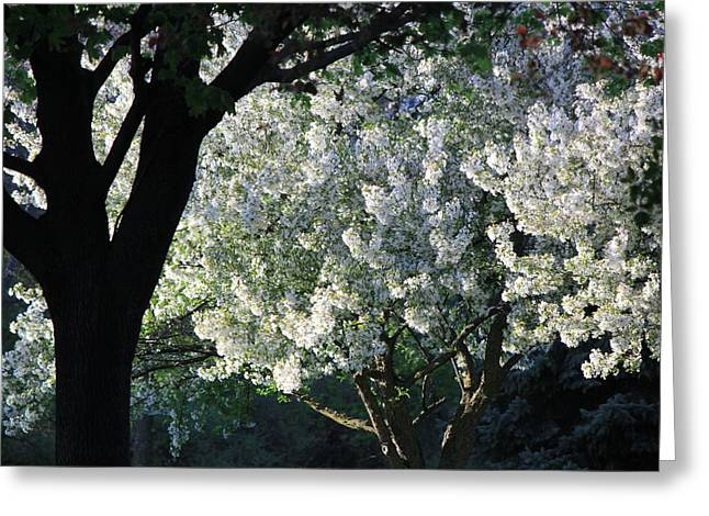 Springtime In Wisconsin Greeting Card by James Hammen