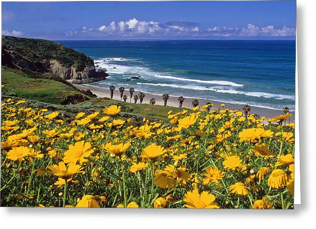 Springtime On The Headlands Greeting Card