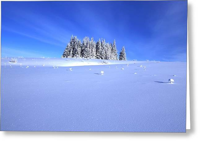 Spruce Grove In Winter Greeting Card