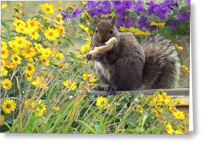 Squirrel   Greeting Card by Amalia Jonas