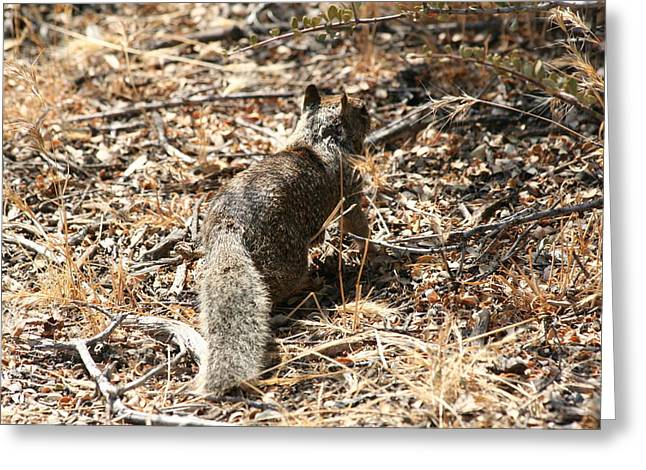 Squirrel Ascent Greeting Card by Diana Poe