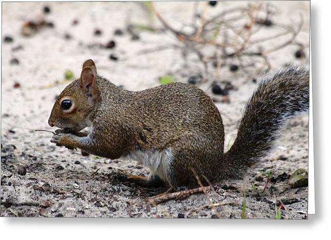 Greeting Card featuring the photograph Squirrel Eating Nuts by Jeanne Andrews