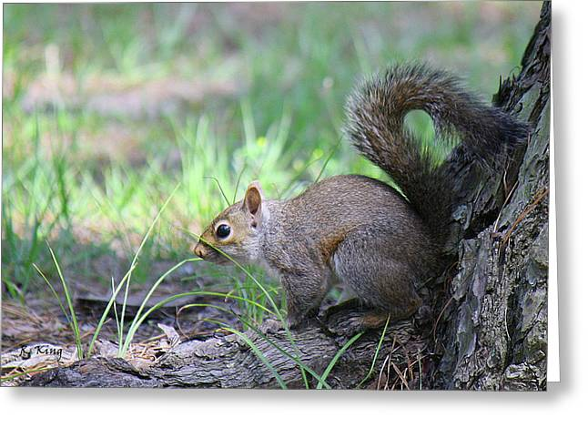 Greeting Card featuring the photograph Squirrel Hiding In The Grass by Roena King