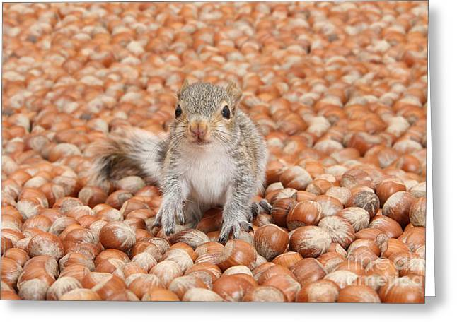 Squirrel In Abundance Of Nuts Greeting Card