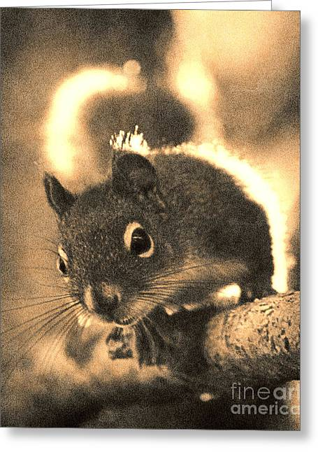 Squirrel In Sepia Greeting Card by Janeen Wassink Searles
