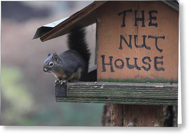 Squirrel In The Nut House Greeting Card by Sam Amato