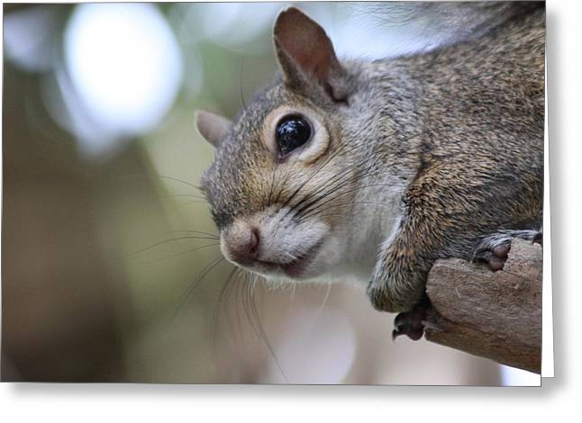 Squirrel Greeting Card by Jeanne Andrews