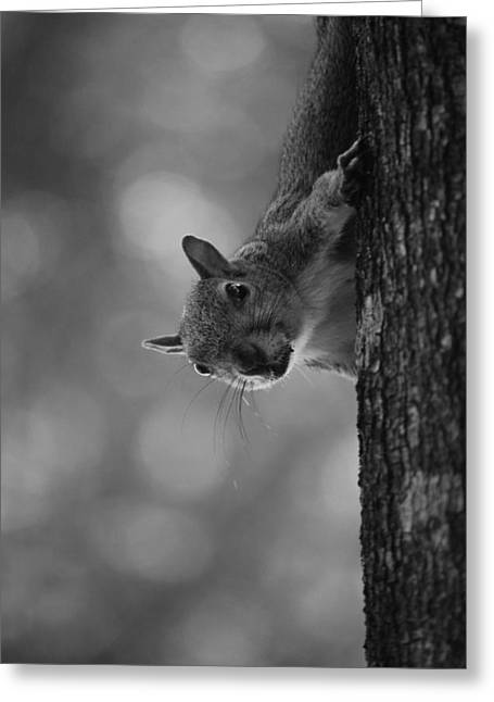 Squirrel On A Tree Greeting Card by Carrie Munoz