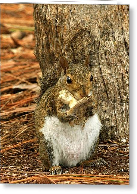 Greeting Card featuring the photograph Squirrel On Shrooms by Rick Frost