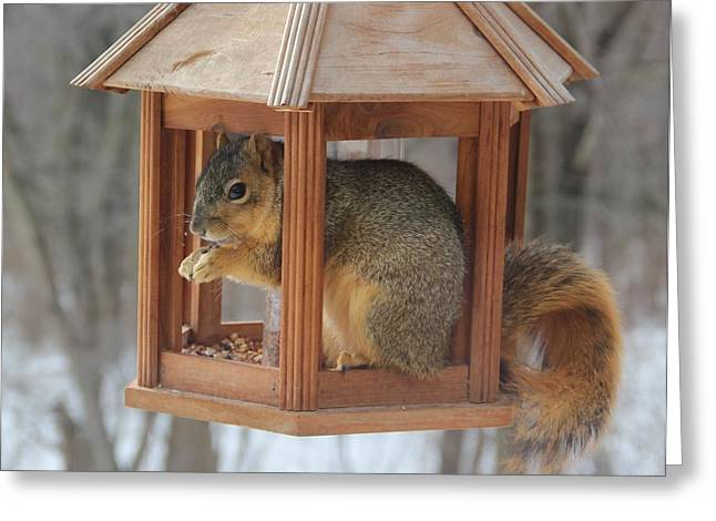 Squirrel Sneaking Food Greeting Card