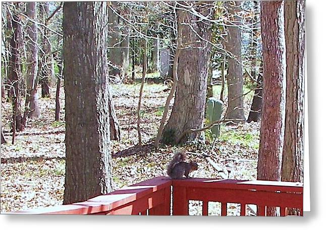 Greeting Card featuring the photograph Squirrel Waiting by Pamela Hyde Wilson