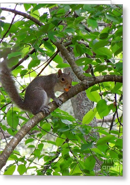 Greeting Card featuring the photograph Squirrel With Candy by Renee Trenholm