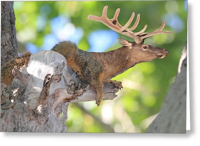 Squirrelk Greeting Card