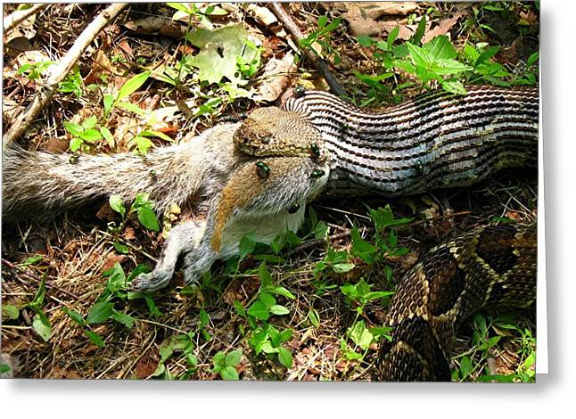 Greeting Card featuring the photograph Squirrel's End by Doug McPherson