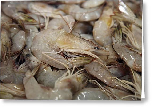 Stack Of Shrimps In Market Greeting Card by Bjorn Svensson